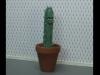 Cactus rights!